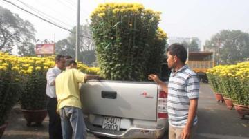 Càng cận Tết càng nóng mặt bằng cho thuê bán cây kiểng