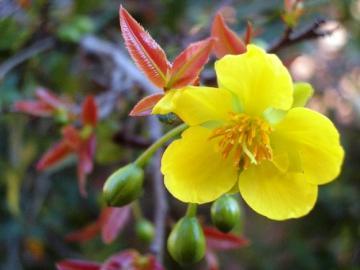 Hình ảnh hoa mai tết trong dịp tết đến xuân về