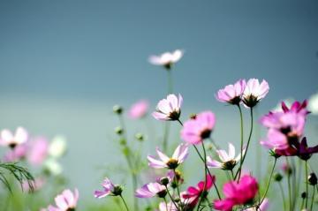 Như hoa Mùa xuân
