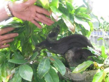 Trồng hoa mai tết bonsai thu lãi lớn