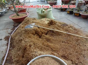 Hướng dẫn cách trộn đất trồng chăm sóc mai vàng sau tết