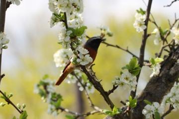 Mùa xuân đầu tiên-Thanh Thúy
