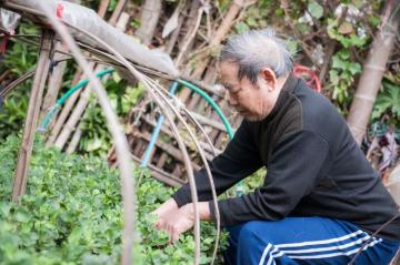 Lão nông cuối cùng của làng hoa Ngọc Hà-Hà Nội