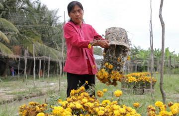 Nỗi lòng người nông dân đổ hoa lấy chậu mùa hoa tết